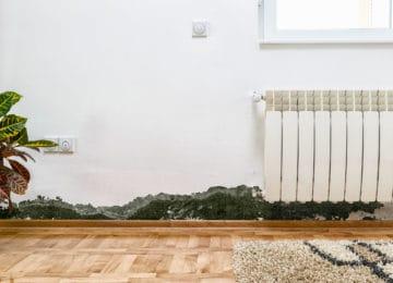 Jak odstranit plíseň
