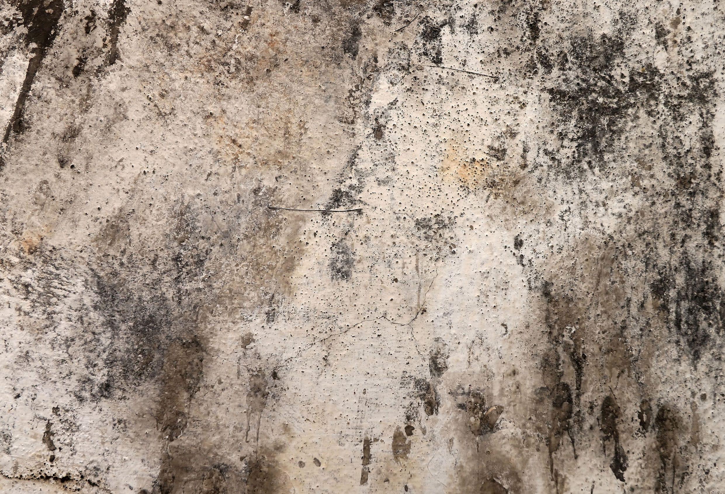 plíseň a řasy na zateplených fasádách Praha 3